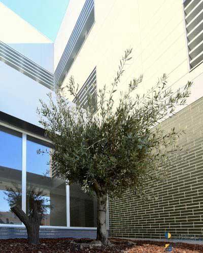 Celosias de lamas tubulares UPE-200x40 para proteccion solar en colegios